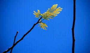 mindful writing | writing and minfulness