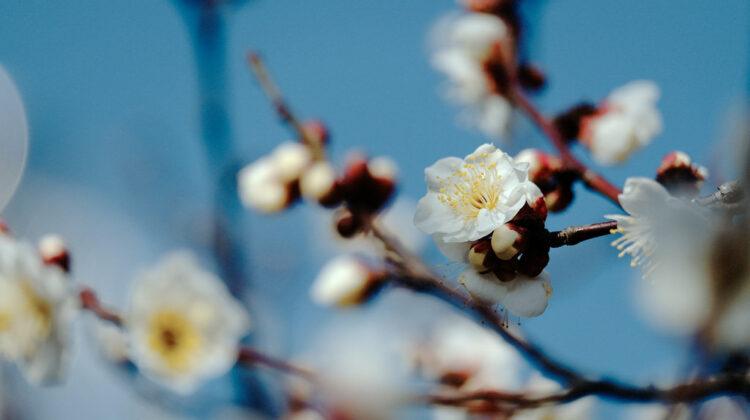 Haiku: Sometimes Spring